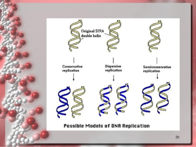 Dna replication template new dna 20 pronofoot35fo Images