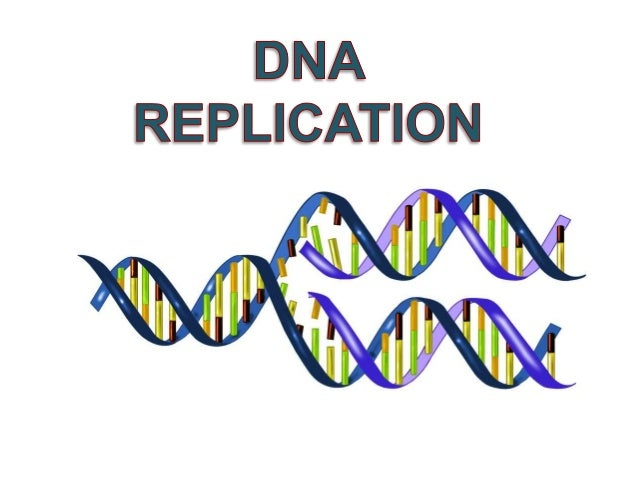 Dnareplication overview a chromosome structure b semiconservative replication c the replication process d malvernweather Image collections