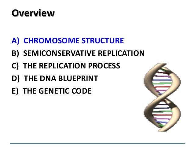 Dnareplication dna blueprint e the genetic code 2 malvernweather Choice Image