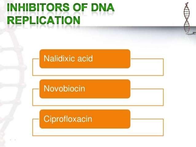 inhibitors of dna replication pdf