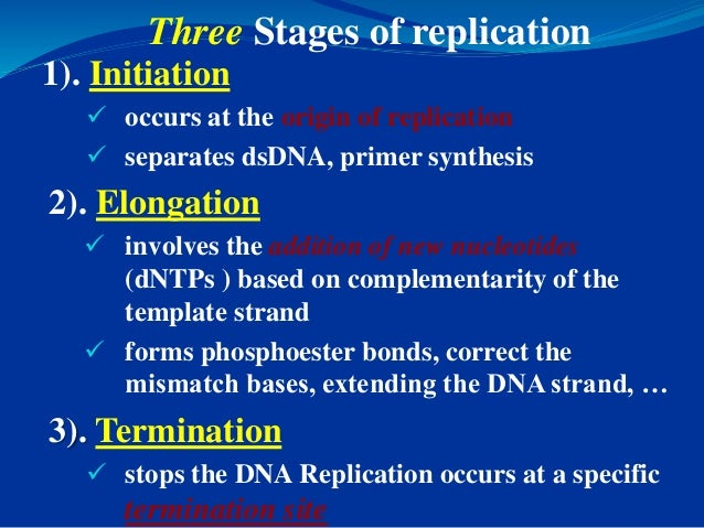 Dna replication primer synthesis 51 pronofoot35fo Choice Image