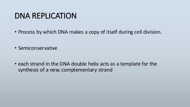 Dna replication leading strand lagging strand replication fork pronofoot35fo Images