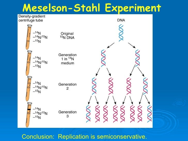 meselson and stahl Meselson and stahl experiment - mcgraw-hill education.
