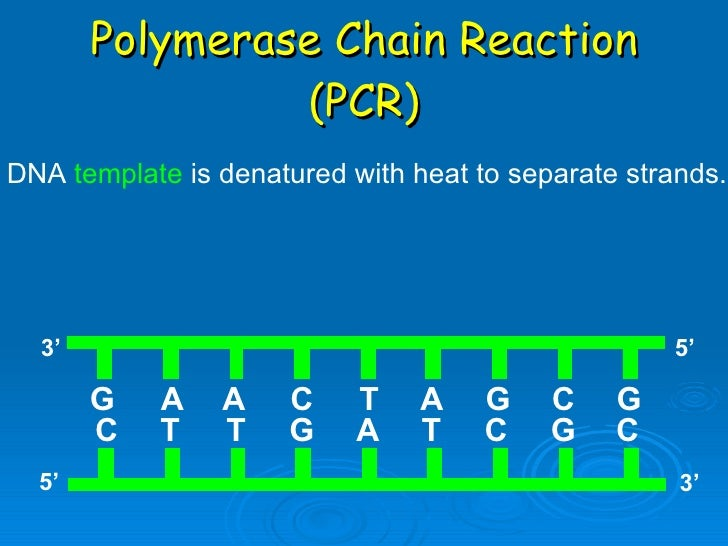 pcr and replication Pcr (polymerase chain reaction) is a revolutionary method developed by kary  b  but pcr reactions can complete many rounds of replication and produce.