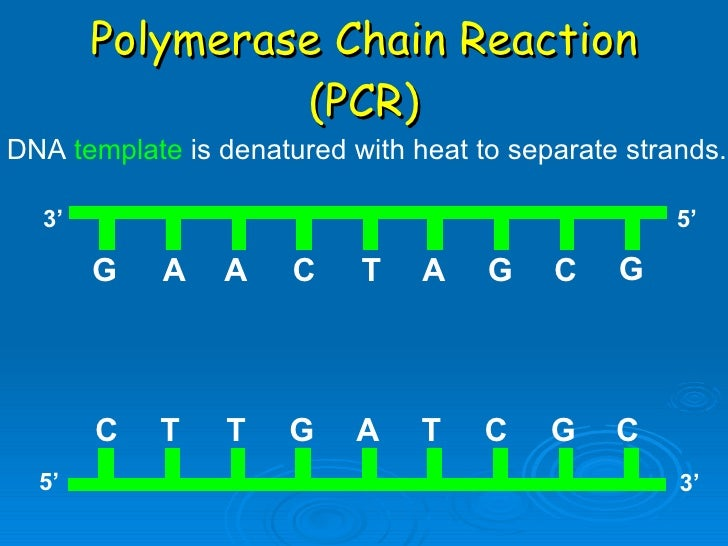 Dna replication and pcr