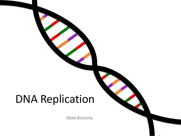 DNA Replication Blake Bizousky