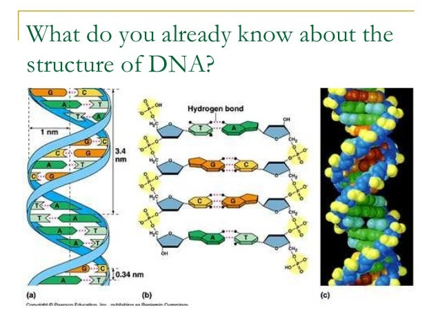 DNA structure, function, replication lesson