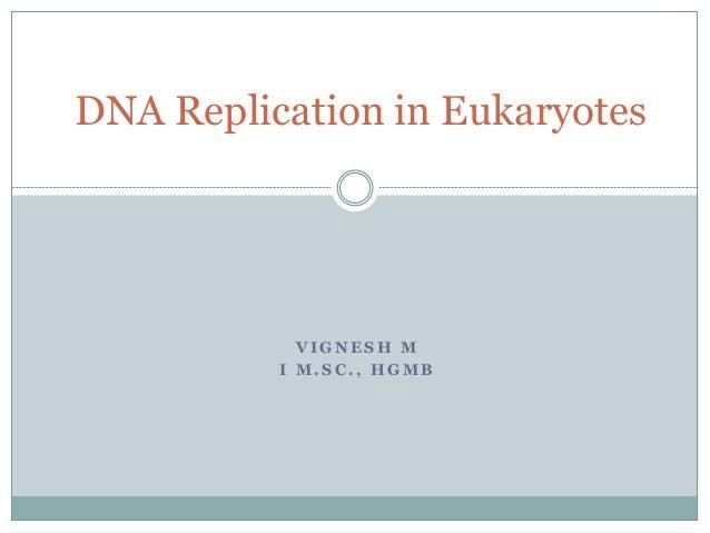 V I G N E S H M I M . S C . , H G M B DNA Replication in Eukaryotes