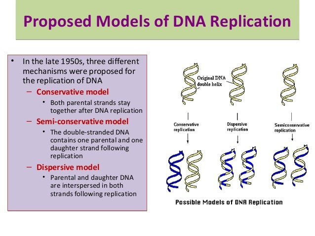 three models of dna replication
