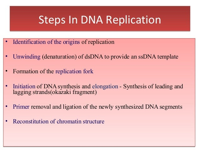 steps of dna replication Dna replication would not occur without enzymes that catalyze various steps in the process dna replication begins at specific site termed as origin of replication, which has a specific sequence that can be recognized by initiator proteins called dnaa.