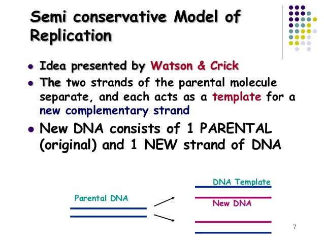Dna replication repair 6 dna replication copyright cmassengale 7 pronofoot35fo Images