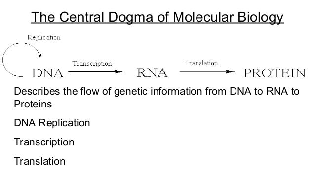 Worksheets Replication Transcription Translation Worksheet dna replication transcription and translation the central dogma of molecular biology 10