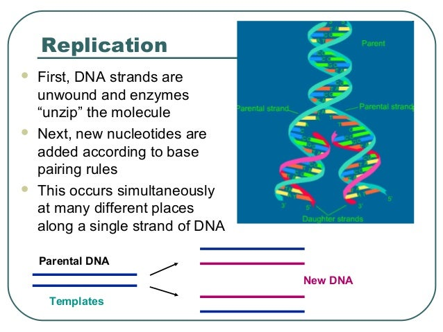 semiconservative replication of dna pdf