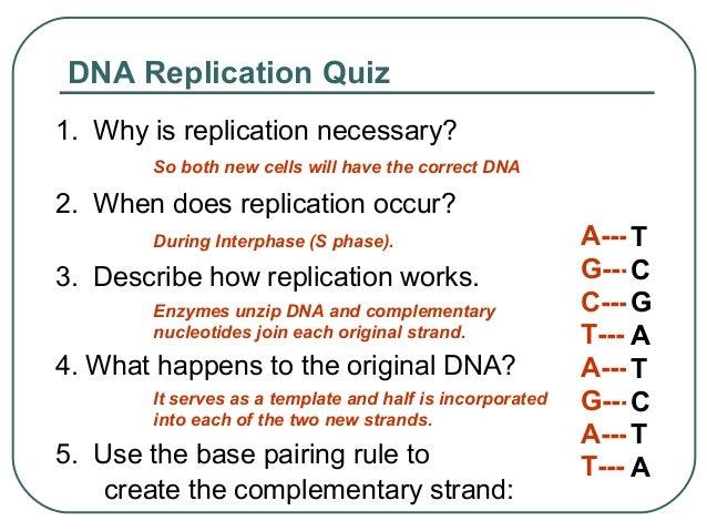 Conclusion 3211 describe how the dna