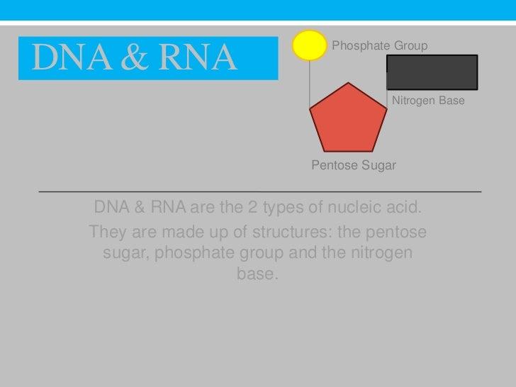 Phosphate GroupDNA & RNA                                          Nitrogen Base                              Pentose Sugar...