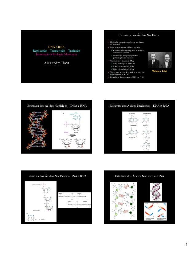 1  DNA e RNA  Replicação – Transcrição – Tradução  Introdução à Biologia Molecular  Alexandre Havt  Estrutura dos Ácidos N...