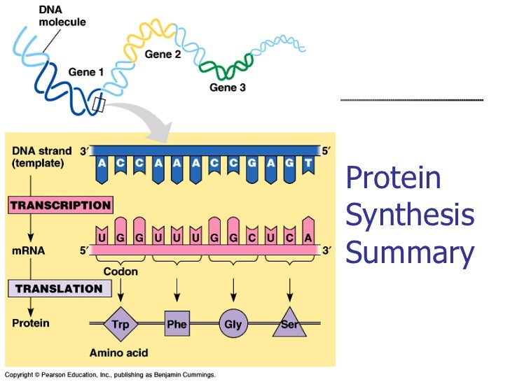 protein summary Protein summary information name jgi's name for the predicted gene if the  gene was predicted by another center, the name is the one assigned by that  center.