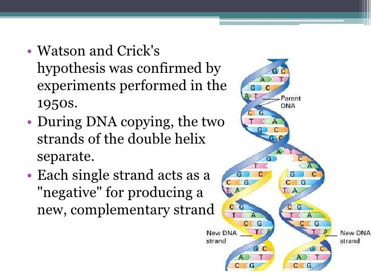 dna structure and replication - Resumess.memberpro.co