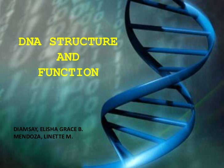DNA STRUCTURE      AND   FUNCTIONDIAMSAY, ELISHA GRACE B.MENDOZA, LINETTE M.