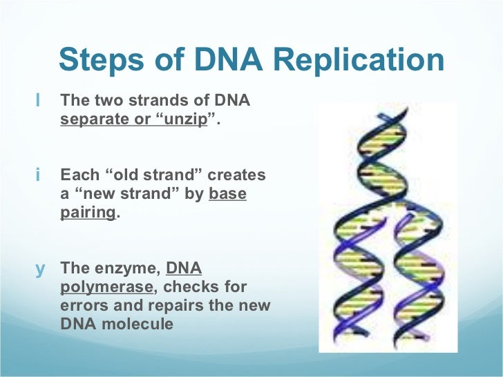 Dna structure and function (notes)