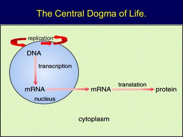 Dna Structure Replication Transcription Translation