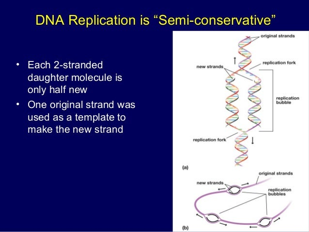 dna structure replication transcription and translation