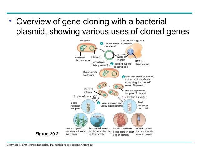research in cloning summary Life science research products pcr amplification  gene cloning is a common practice in molecular biology labs that is used by researchers to create copies .
