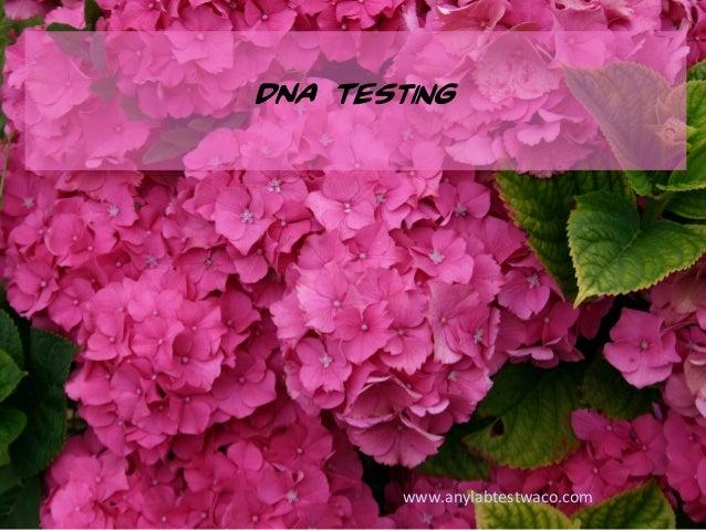 DNA Testing www.anylabtestwaco.com