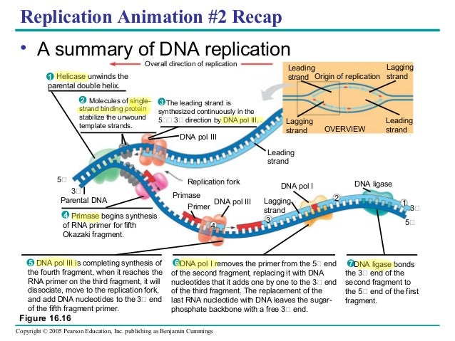 Simple Labeled Diagrams Of Transcription Labeled Diagram ...