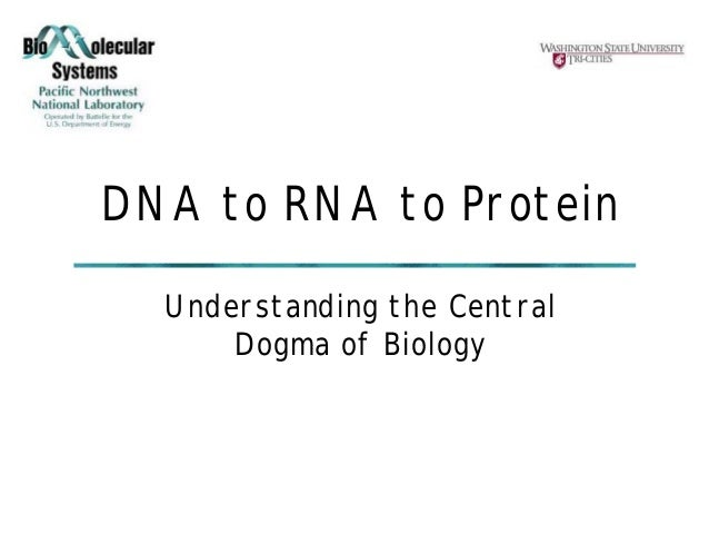 Dna to rna to protein central dogma
