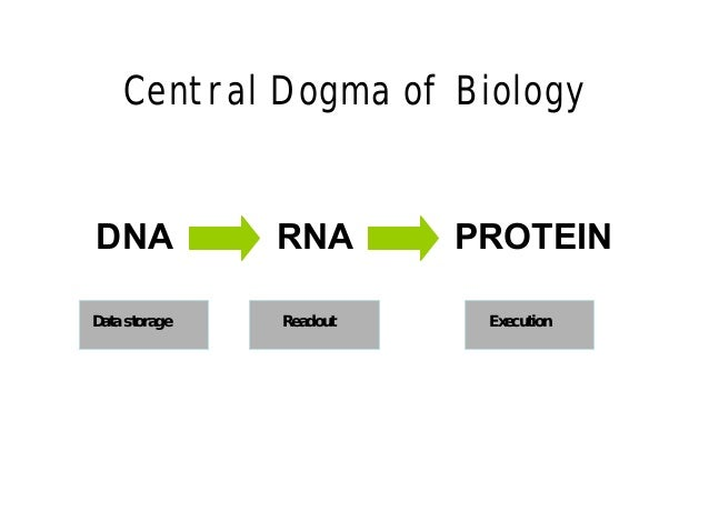 how to translate rna to protein