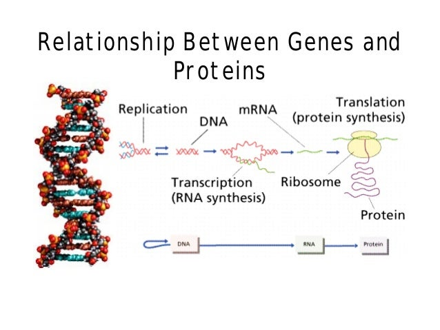 protein and dna relationship index
