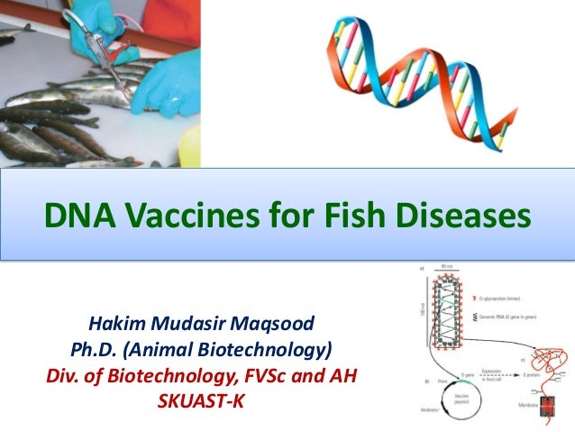 DNA Vaccines for Fish Diseases Hakim Mudasir Maqsood Ph.D. (Animal Biotechnology) Div. of Biotechnology, FVSc and AH SKUAS...