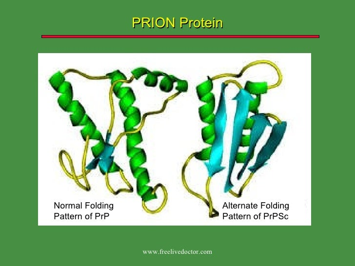 the elusive prion and cjd diseases Genetic prion diseases are late onset fatal neurodegenerative disorders linked to pathogenic mutations in the prion protein-encoding gene, prnp the most prevalent of these is the substitution of glutamate for lysine at codon 200 (e200k), causing genetic creutzfeldt-jakob disease (gcjd) in several.