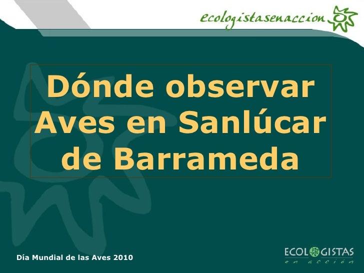 Día Mundial de las Aves 2010 Dónde observar Aves en Sanlúcar de Barrameda
