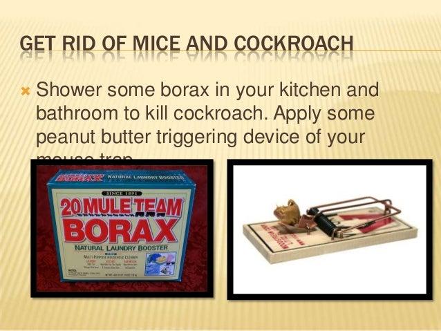 Home mosquito control | Termite inspection