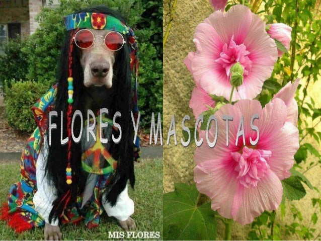 Do.floresymascotas