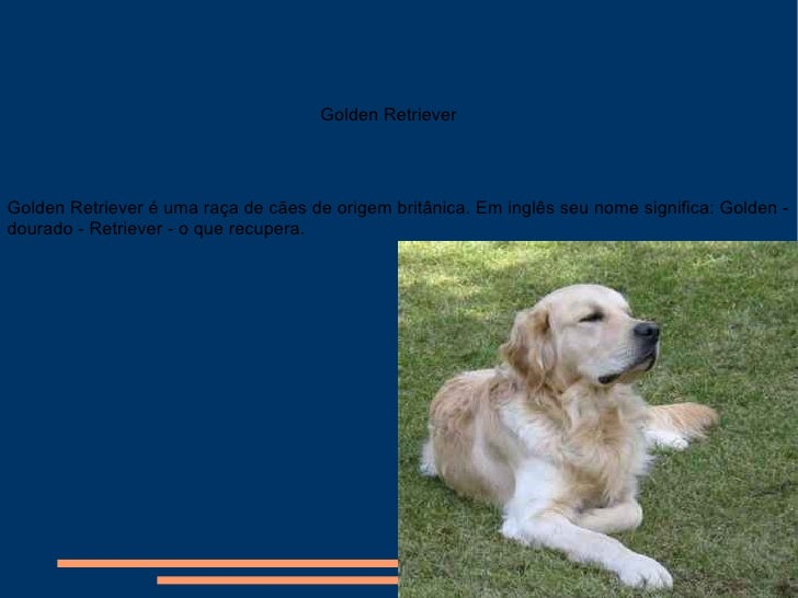 Golden Retriever é uma raça de cães de origem britânica. Em inglês seu nome significa: Golden - dourado - Retriever - o qu...