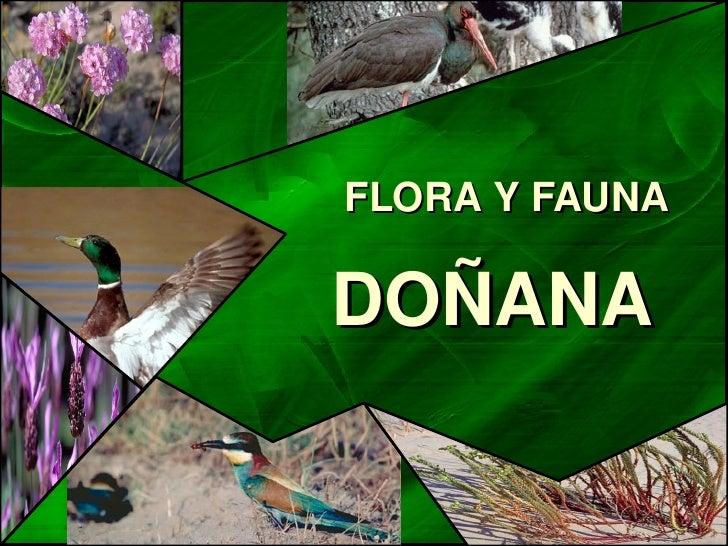 FLORAYFAUNA      DOÑANA