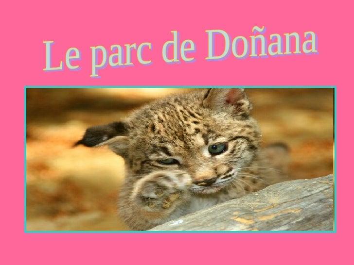 Le parc de Doñana