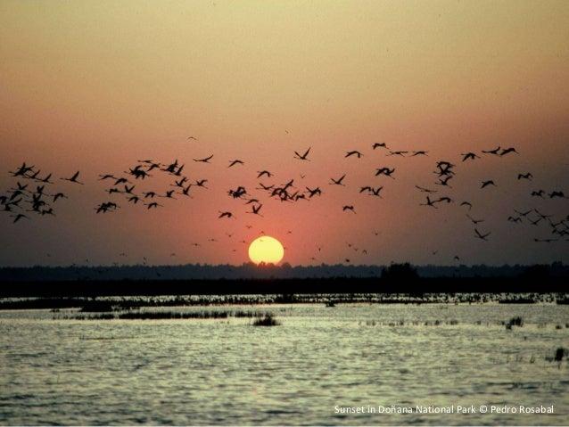 Sunset in Doñana National Park © Pedro Rosabal
