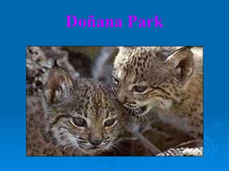 Doñana Park