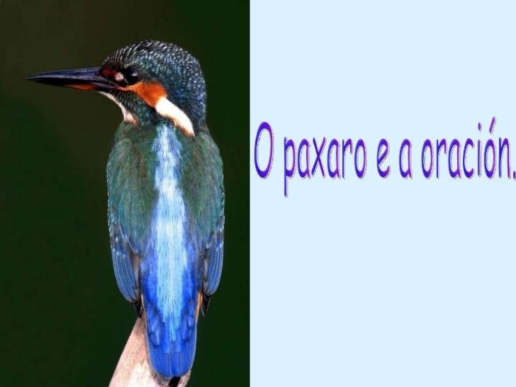 O paxaro e a oración.