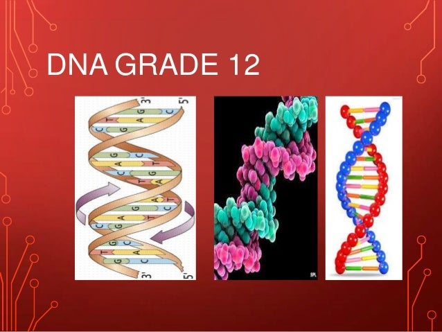 DNA GRADE 12