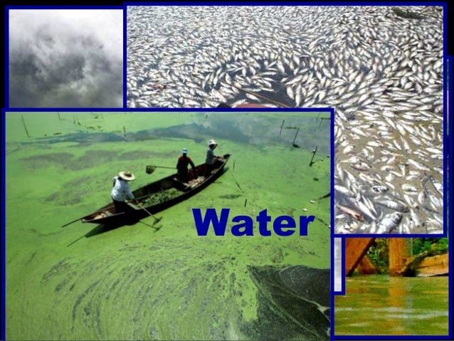 We can preplenish the nutrients that the pollution robs from our enviroment.  We can neutrialize radiatio Slide 3