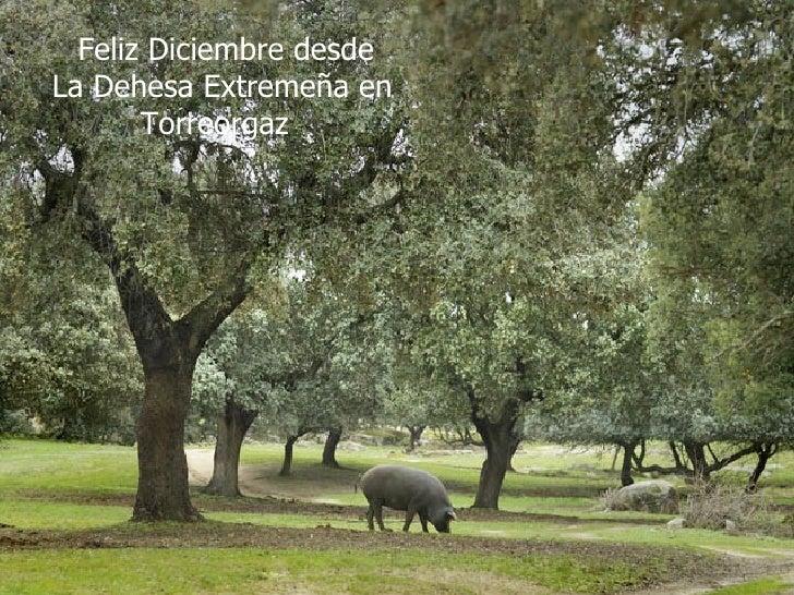 Feliz Diciembre desde La Dehesa Extremeña en Torreorgaz