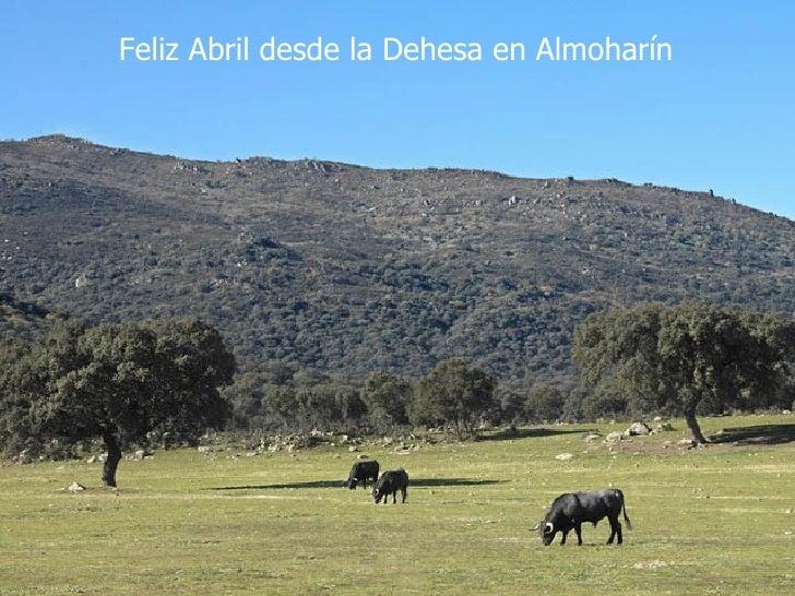 Feliz Abril desde la Dehesa en Almoharín