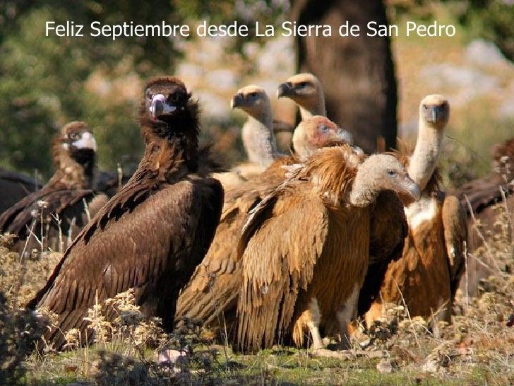 Feliz Septiembre desde La Sierra de San Pedro