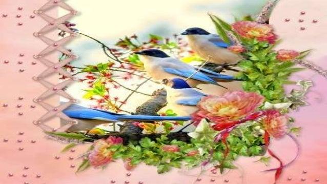 São beija-flores, sanhaços, sabiás, bem-te-vis, voejando em frente à minha janela, ao som da alegre sinfonia dos rouxinóis...