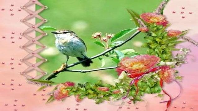 Ah, que lindos passarinhos bebendo água docinha, nos potinhos espalhados entre as árvores... Às vezes brigam, levantando a...